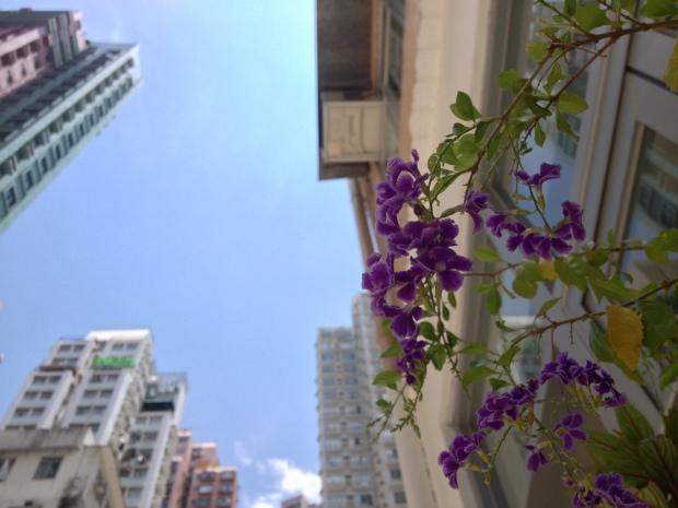 22 Days in Hong Kong